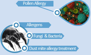 Dust Mites Allergy